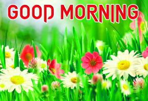 Beautiful Good Morning Images photo pics download