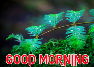 Beautiful Good Morning Images photo picture download