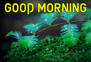 Beautiful Good Morning Images photo pics for friend