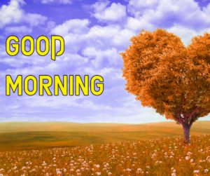 Beautiful Good Morning Images picture for best friend