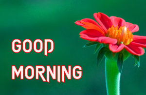 Beautiful Good Morning Images pics photo for friend