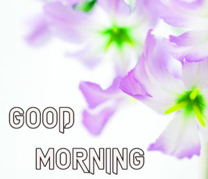 Beautiful Good Morning Images wallpaper picture for friend