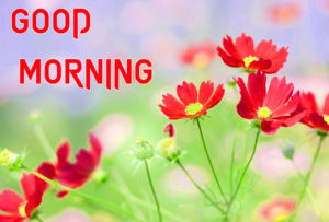 Beautiful Good Morning Images photo download