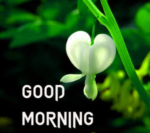 Beautiful Good Morning Images picture for friend