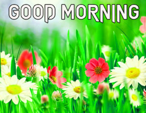 Beautiful Good Morning Images photo for friend