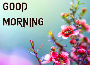 Beautiful Good Morning Images wallpaper for whatsapp
