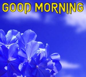 Beautiful Good Morning Images photo pics for best Friend