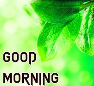Beautiful Good Morning Images photo for dear friend