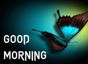 Beautiful Good Morning Images wallpaper pics downloadc