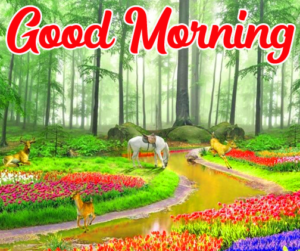 Good Morning Images Pics HD Download