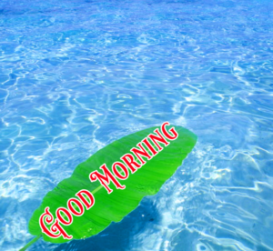 Good Morning Images Wallpaper Free