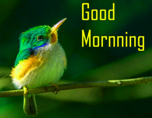 Good Morning Images Pics Free for Facebook