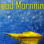 New 1235+ HD Beautiful Good Morning Images Pics HD Download