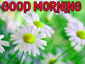 Friend Latest Good Morning Images wallpaper pics