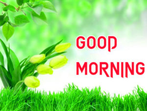 Friend Latest Good Morning Images wallpaper picture download