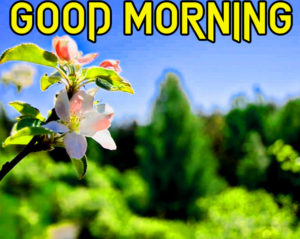 Friend Latest Good Morning Images pics download