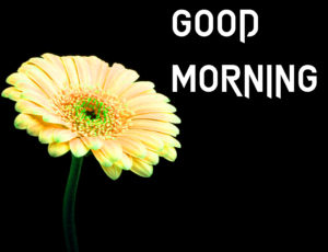 Friend Latest Good Morning Images picture download