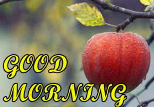 Friend Latest Good Morning Images photo for whatsapp