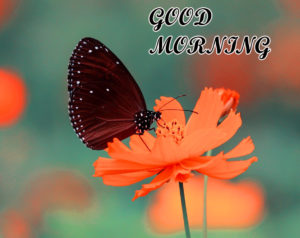 Friend Latest Good Morning Images pics for friend