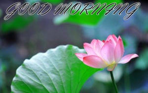 Friend Latest Good Morning Images wallpaper download
