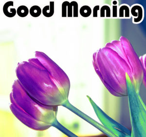 Friend Latest Good Morning Images picture for friend