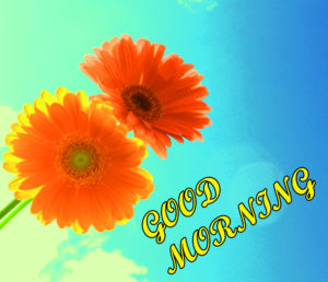 Friend Latest Good Morning Images wallpaper pics download