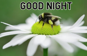 Good Night Images wallpaper picture friend