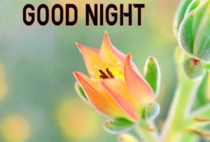 Good Night Images wallpaper pics photo for whatsapp