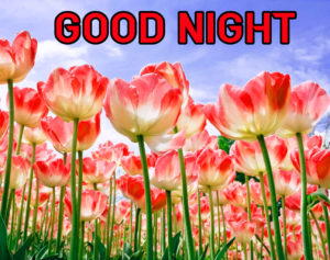 Good Night Images picture photo pics for best friend