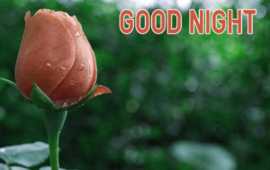 Good Night Images picture download