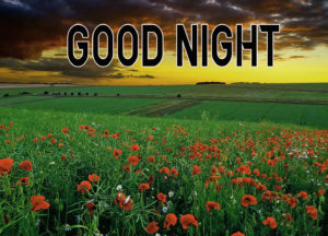 Good Night Images wallpaper picture for friend