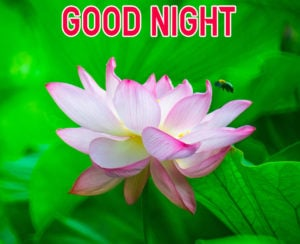 Good Night Images wallpaper pics for friend