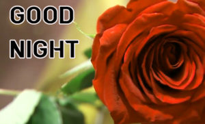 Good Night Images picture pics for best friend