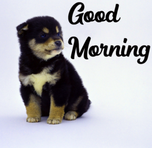 Beautiful Good Morning Images Puppy