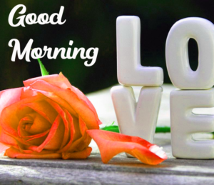 Beautiful Good Morning Images With Rose