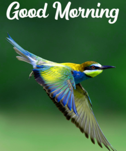 Beautiful Good Morning Images Photo Pic Download