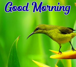 Beautiful Good Morning Images Pics Free Download for Whatsapp