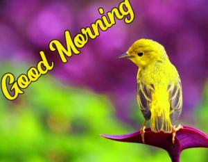 Beautiful Good Morning Images Wallpaper Pic Download