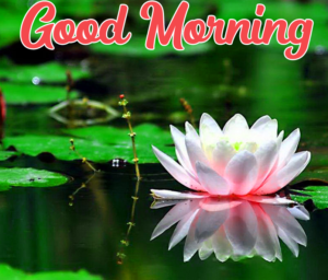 Beautiful Good Morning Images Pics Wallpaper Download
