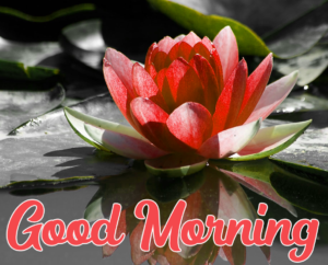 Beautiful Good Morning Pic Download