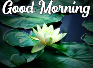 Beautiful Good Morning Photo for Facebook