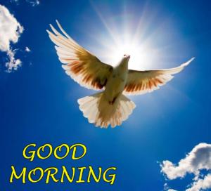 Beautiful Good Morning Images Pics Free Download
