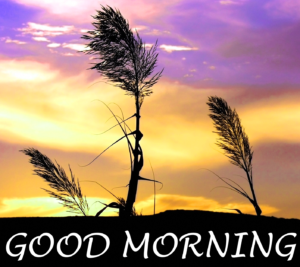 Beautiful Good Morning Images Wallpaper Pics Download Latest New Best