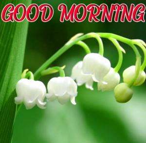 Beautiful Good Morning Images Pics Free HD Download