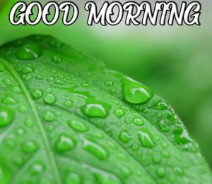 Beautiful Good Morning Images Wallpaper Free Download