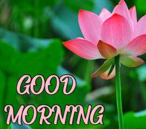 Beautiful Good Morning Wallpaper With Flower
