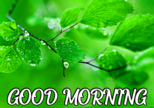 Beautiful Good Morning Images Photo Free Download