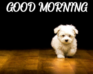 Beautiful Good Morning Images Pics photo Dow load