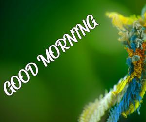 Beautiful Good Morning Pics Free Latest