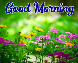 Beautiful Good Morning Images With Flower